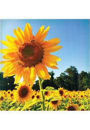 Kansas Sunflower Field Coaster